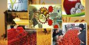 افتتاح ۸ پروژه در بخش کشاورزی ساوه