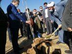 توزیع ۱۰ هزار اصله نهار توسط شهرداری ساوه