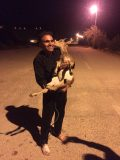 نجات یک راس بز وحشی در نزدیکی سد الغدیر ساوه !
